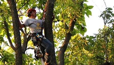 Vieau S Tree Service Northern Michigan Tree Service And
